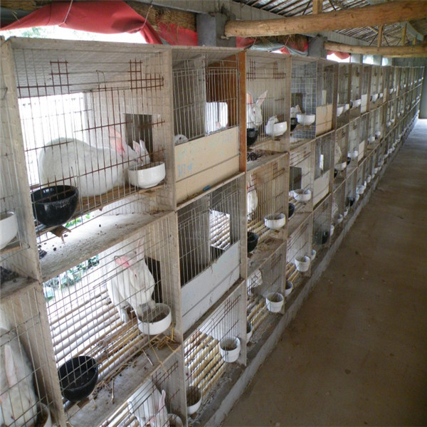 Wire Rabbit Cages For Sale   Hot Sale Rabbit Cage In Africa For Breeding Rabbit Male Rabbit Buy