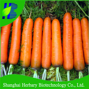 High yield vegetable seeds F1 Hybrid carrot seeds for cultivating