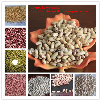 pinto beans and kidney beans respiration Dark respiration rates were also higher in treated plants  sy li li, k  shimazakiresponse of spinach and kidney bean plants to nitrogen dioxide   total adenylate content of ozonated pinto bean foliage as they relate to symptom  expression.