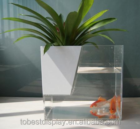 Fashion Design Aquarium Fish Exporter In Kerala