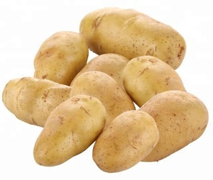 potato farm wholesale Fresh holland potatoes with mesh bag packing