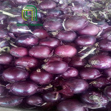 Hot selling market price china different size of fresh red onions for sale