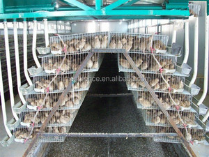 galvanized A type layer quail cages for sale in Kenya farm