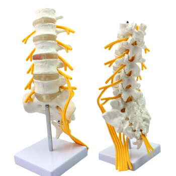 Venta al por mayor anatomia 1-Compre online los mejores anatomia 1 ...