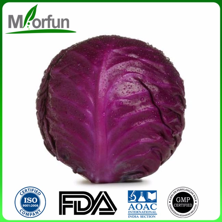 Organic cabbage anthocyanins powder supplier cabbage purple color Manufacturer