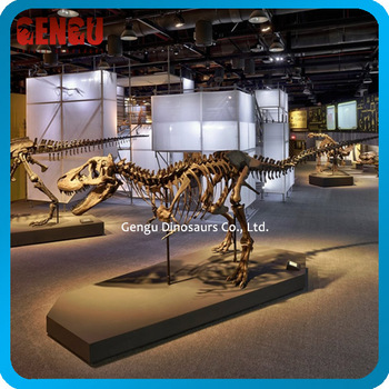 Indoor Playground Museum Quality Dinosaur Skeleton Model