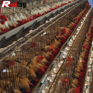 Manufacturers supply 18650 battery cages laying hens 160birds chicken layer cage 160bird hen