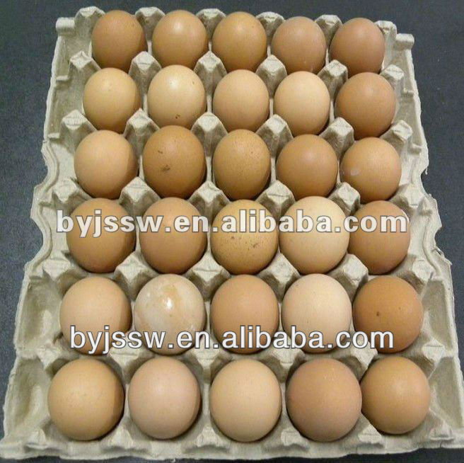 Egg Carton / Egg Tray / Egg Box