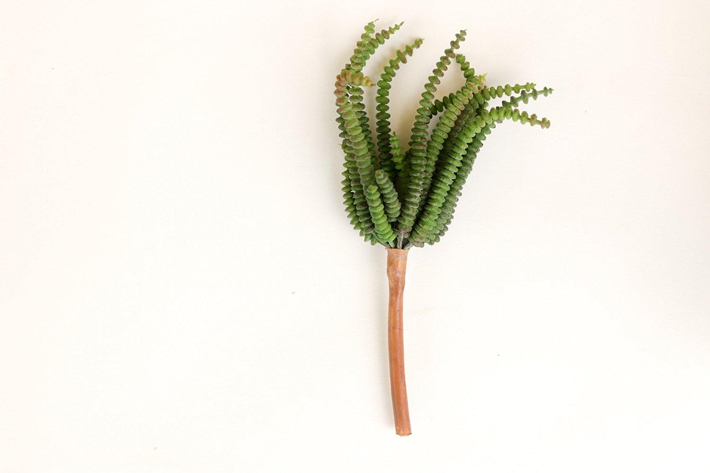 """Artificial Succulent, Faux Worm Succulent Pick, 7.5"""""""