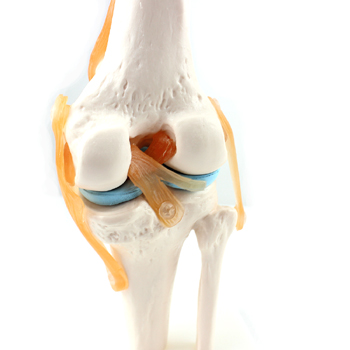 Venta al por mayor maquetas anatomia humana-Compre online los ...