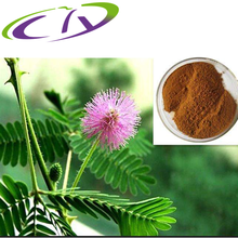 Natural Sensitive plant Herb Extract/mimosa hostilis powder/mimosa pudica powder for Antioxidant,anticancer CAS#:90045-23-1