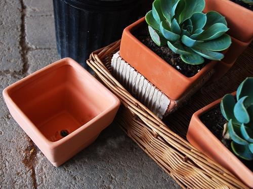 Image Result For Terracotta Garden Pots