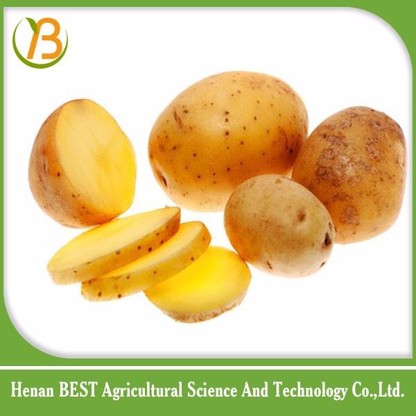 Fresh Fruits And Vegetables Importers In Saudi Arabia