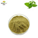 High Quality Traditional Chinese Herbal 100% Natural Lemon Balm Melissa officinalis Extract Powder