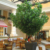 Indoor Decoration Hotel Public Area Hall Decorative Artificial High Banyan Tree With Leaves