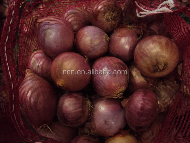 Fresh Onion supplier manufacturer