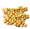 Wholesale soybeans for hot sale and with low price and manufacture soybean