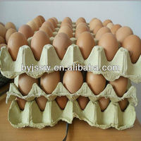 recycled paper egg tray