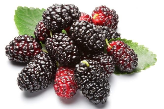 Food Grade natural Mulberry Fruit Concentrate Extract Powder