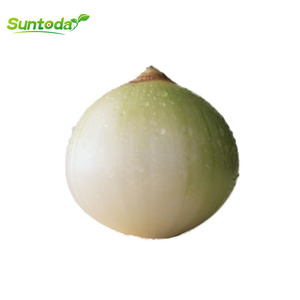 White vegetable F1sale pakistan onion seeds for sale