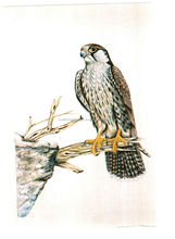 custom printed falcon theme silk paintings for home decorations, interior designers, interior deco