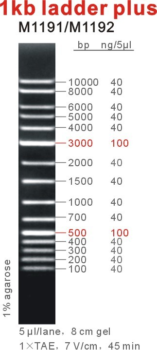 1kb DNA Ladder Plus