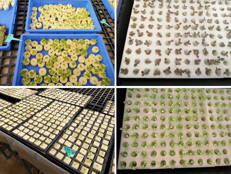 Как высаживать семена для гидропоники прикорма для карпа из конопли