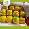 farm frozen diced bell peppers colored capsicum yellow with high quality