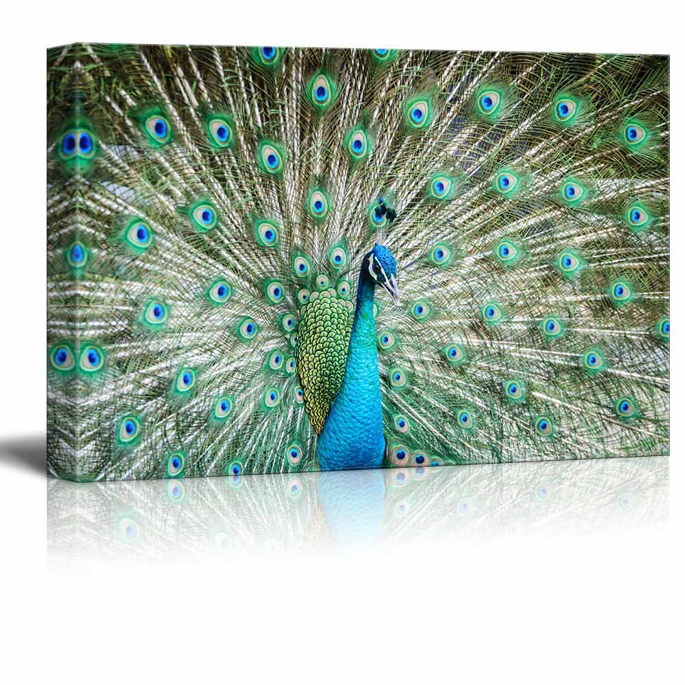 "Canvas Prints Wall Art - Peacock Showing Its Beautiful Feathers/Spreading Its Tail | Modern Wall Decor/ Home Decoration Stretched Gallery Canvas Wrap Giclee Print & Ready to Hang - 24"" x 36"""