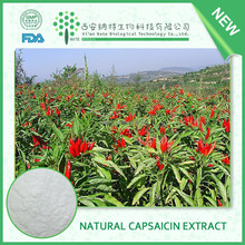 Pharmaceutical Grade Natural plant extract Pure capsaicin price 95% capsaicin powder in bulk