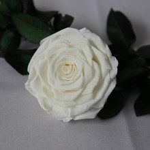 Elegant Forever Rose Bella For Centerpieces Offered Continuously