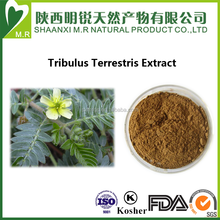 Factory supply tribulus terrestris extract with kosher cert