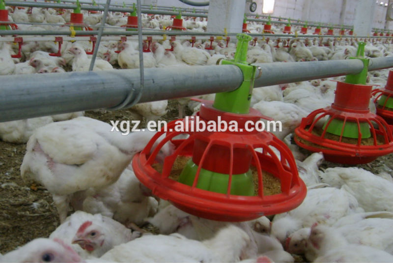 Chinese Steel Frame Turnkey Poultry House With Automated Facilities