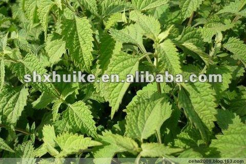 Rabdosia Rubescens Extract Powder