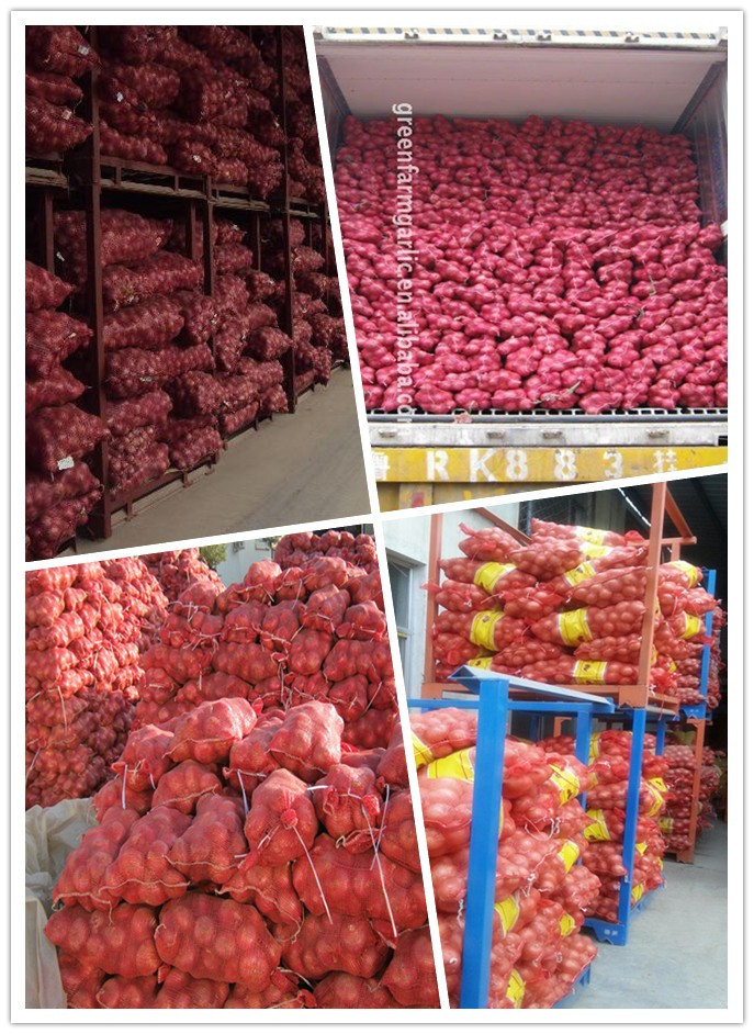 the cheapest yellow onion in jining greenfarm