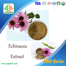 Water soluble herbal extract Echinacea, Echinacea purpurea extract 4% Polyphenols, Echinacea extract powder