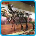 Museum dinosaur life-size skeleton for sale