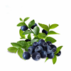 Ba Xi Mei 2016 New Products Brazilian Acai Extract Polyphenols