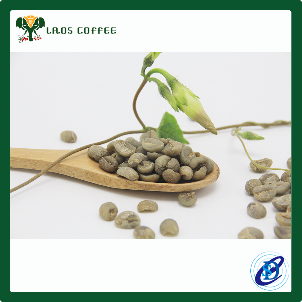 good quality indonesia green coffee beans high