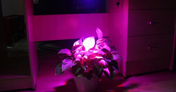 20w Led Grow Lights Blue 460nm Red 630nm Flood Light For ...