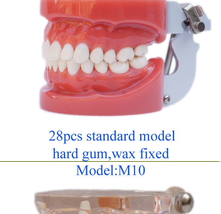 Emulational Dental Crystal Base Acrylic Denture Teeth