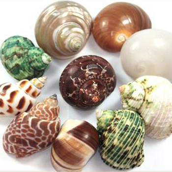 Factory Direct Sales Natural Mixed Snail Sea Shells For Hermit Crab