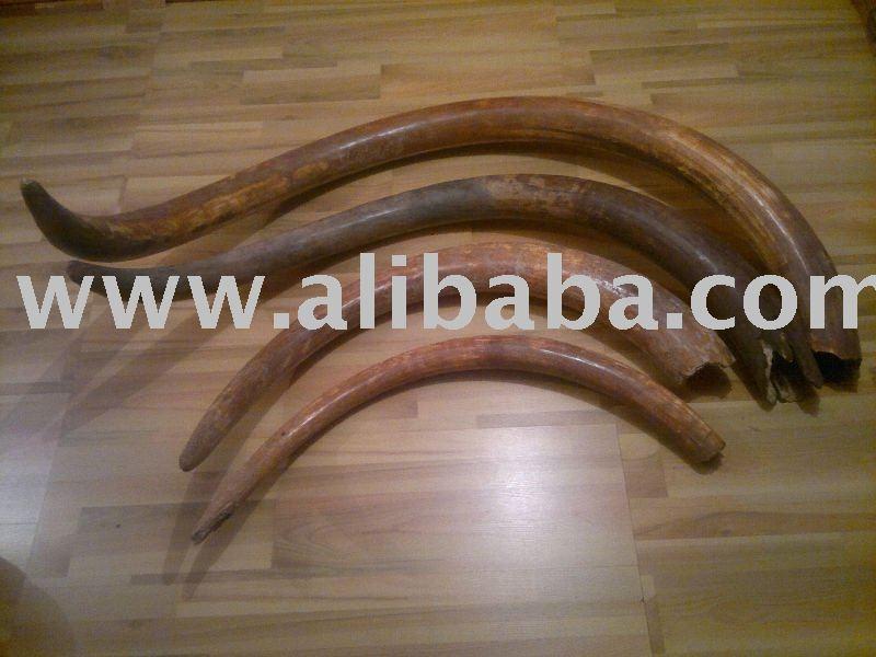 Mammoth Tusk - Buy Mammoth Tusk Product on Alibaba com
