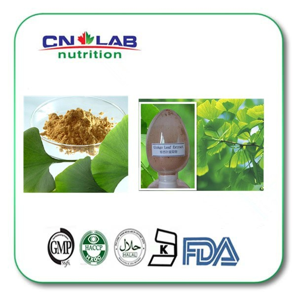 100% Natural Herbal Extract Ginkgo Biloba Leaf Extract to treat circulatory disorders and enhance memory