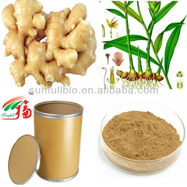 pure Ginger plant extract powder