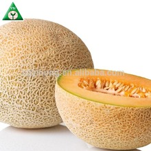 Yellow Moon strong growth anti wilt disease hybrid golden melon seeds
