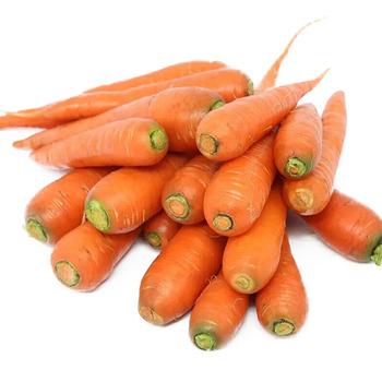 Fresca Zanahoria Natural Para La Exportacion Buy Zanahoria Fresca Zanahoria China Fresca Zanahorias Frescas Para La Venta Product On Alibaba Com Al mismo tiempo, por su riqueza en pectinas, constituye un buen remedio para combatir la diarrea, resultando muy interesante en los casos de diarrea infantil. alibaba