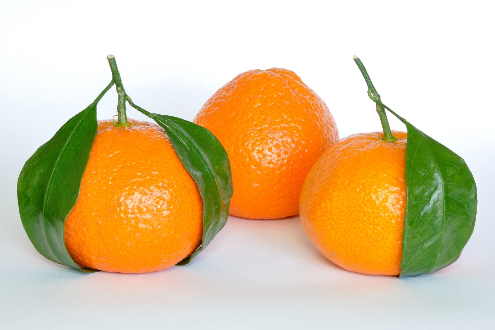 Wholesales price Chinese nanfeng fresh baby mandarin orange fruit