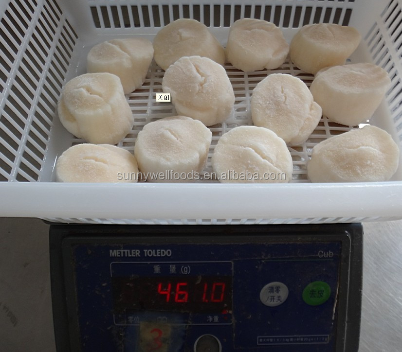Frozen sea scallop meat