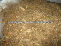 MIXED CORN SILAGE FOR COW DAIRY